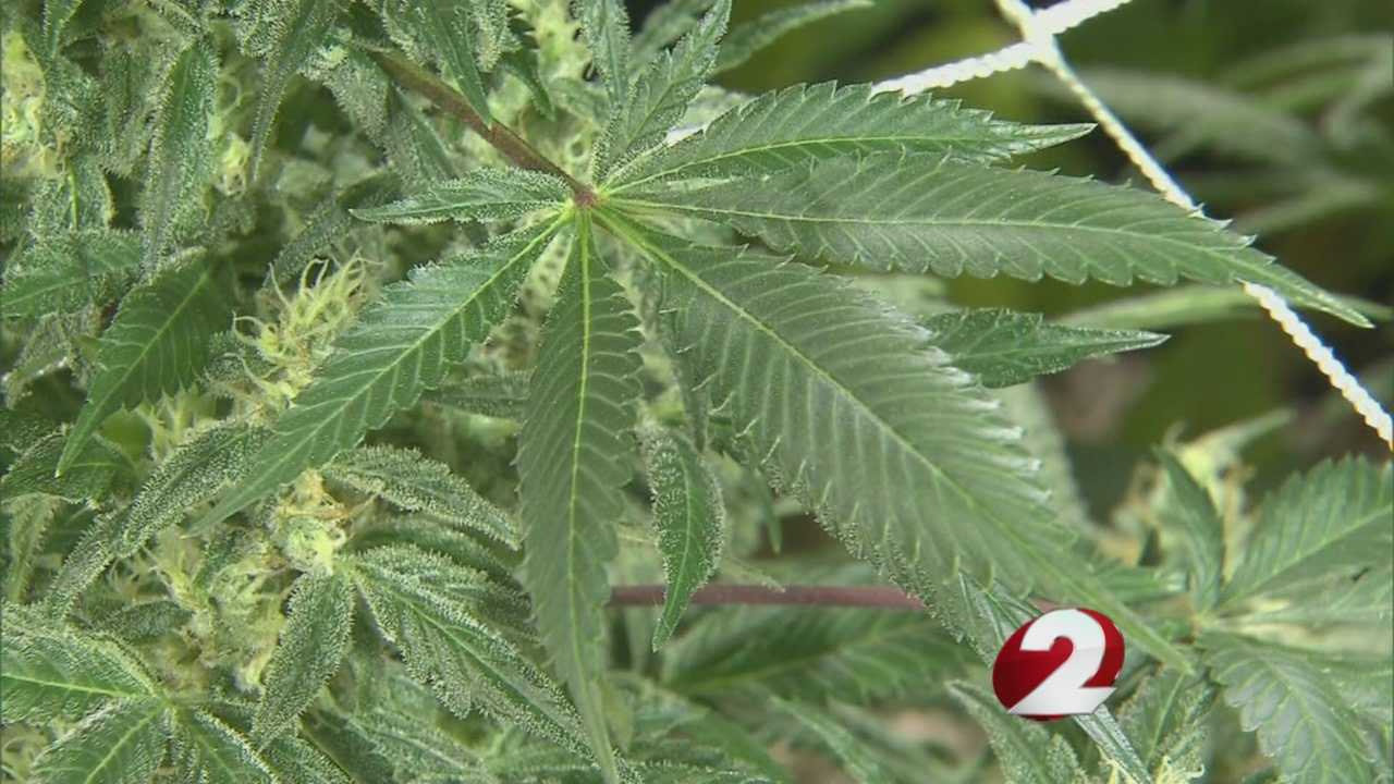 State resolution could nullify voter approval for marijuana_101104
