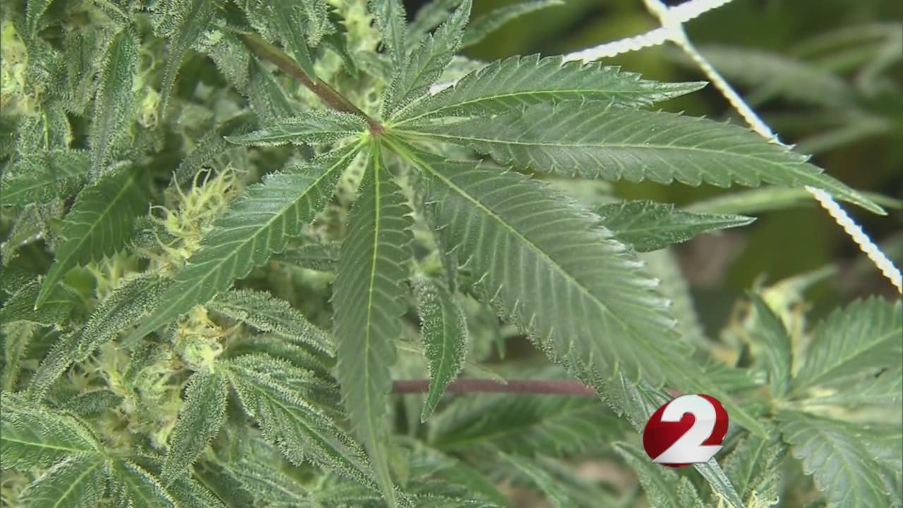 Majority of Ohioans want medical marijuana legalized