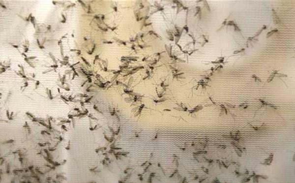 Zika Virus Texas_142544