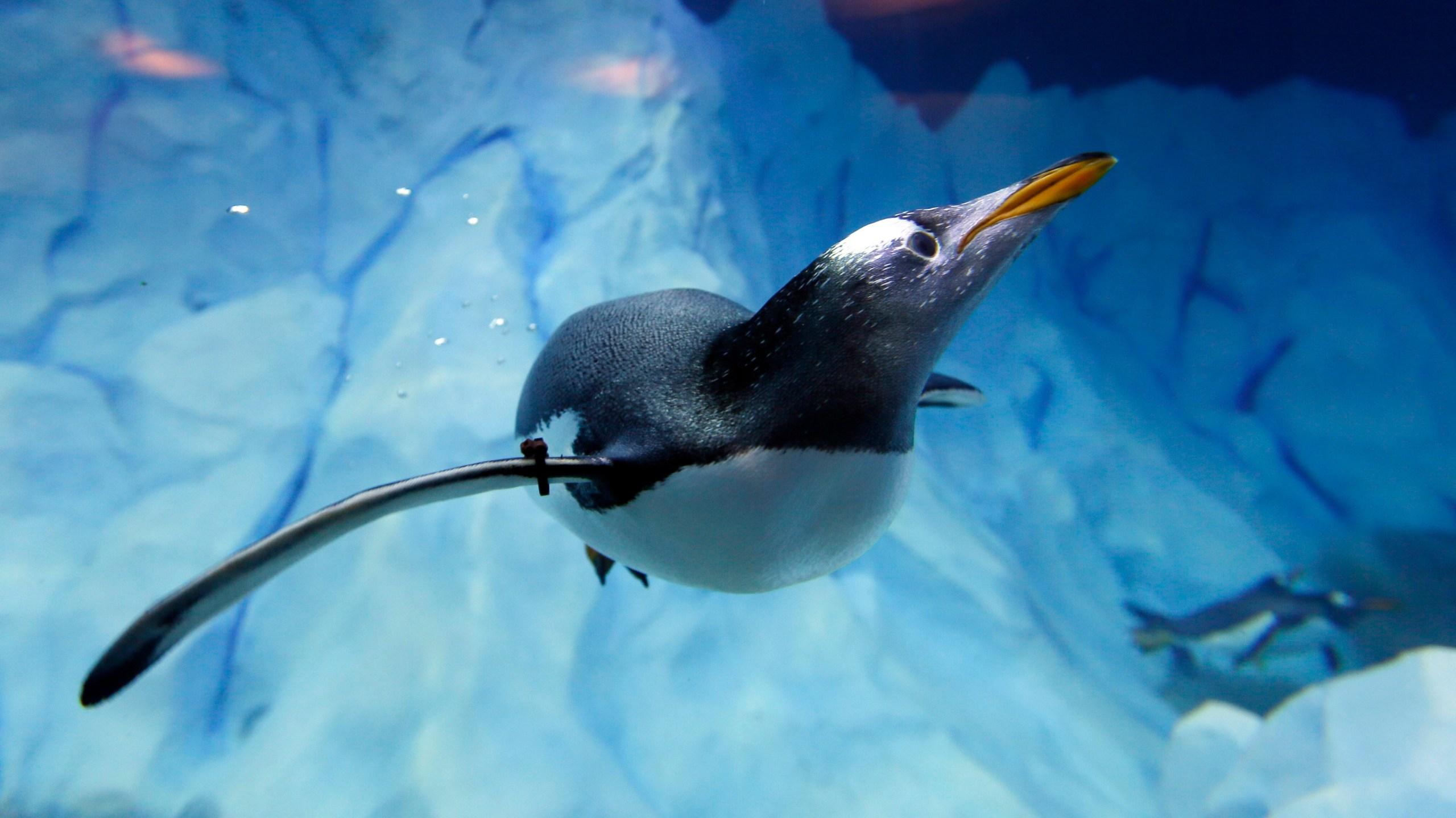 Detroit Zoo Penguins_154142