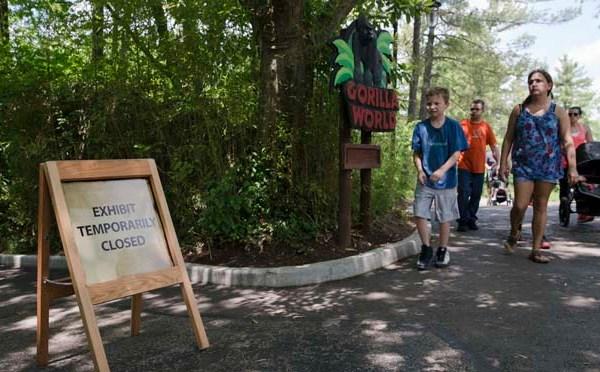 Zoo Gorilla Child Hurt_163212