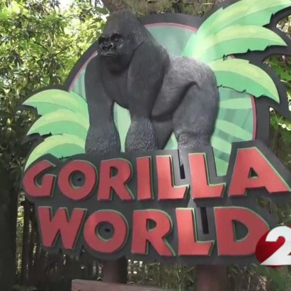 Fairborn woman recounts Cincinnati gorilla exhibit incident_162986
