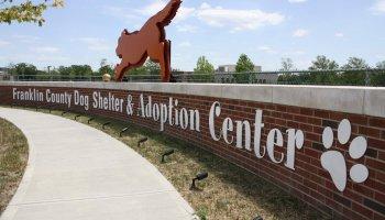 dog-shelter_190780