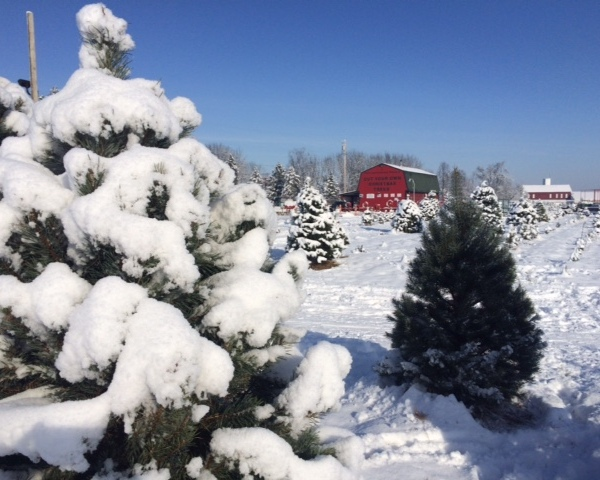 Carl & Dorothy Young's Tree Farm_212137