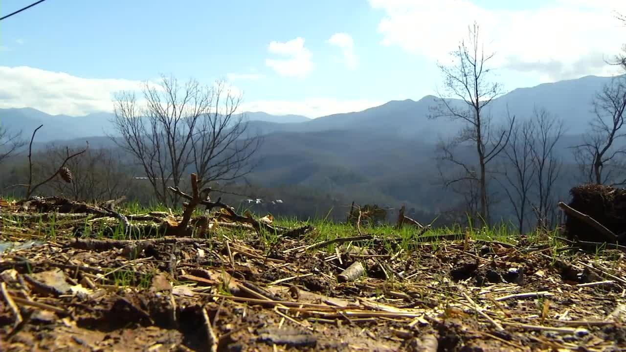 gburg-burnt-trees_229381