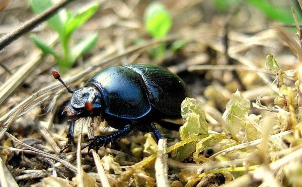 beetle_252066