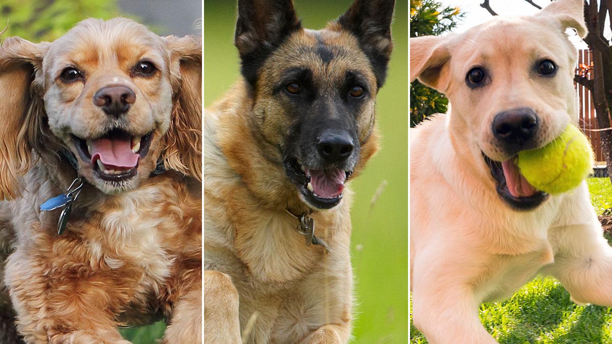 dog-breed-quiz-thumb_253630