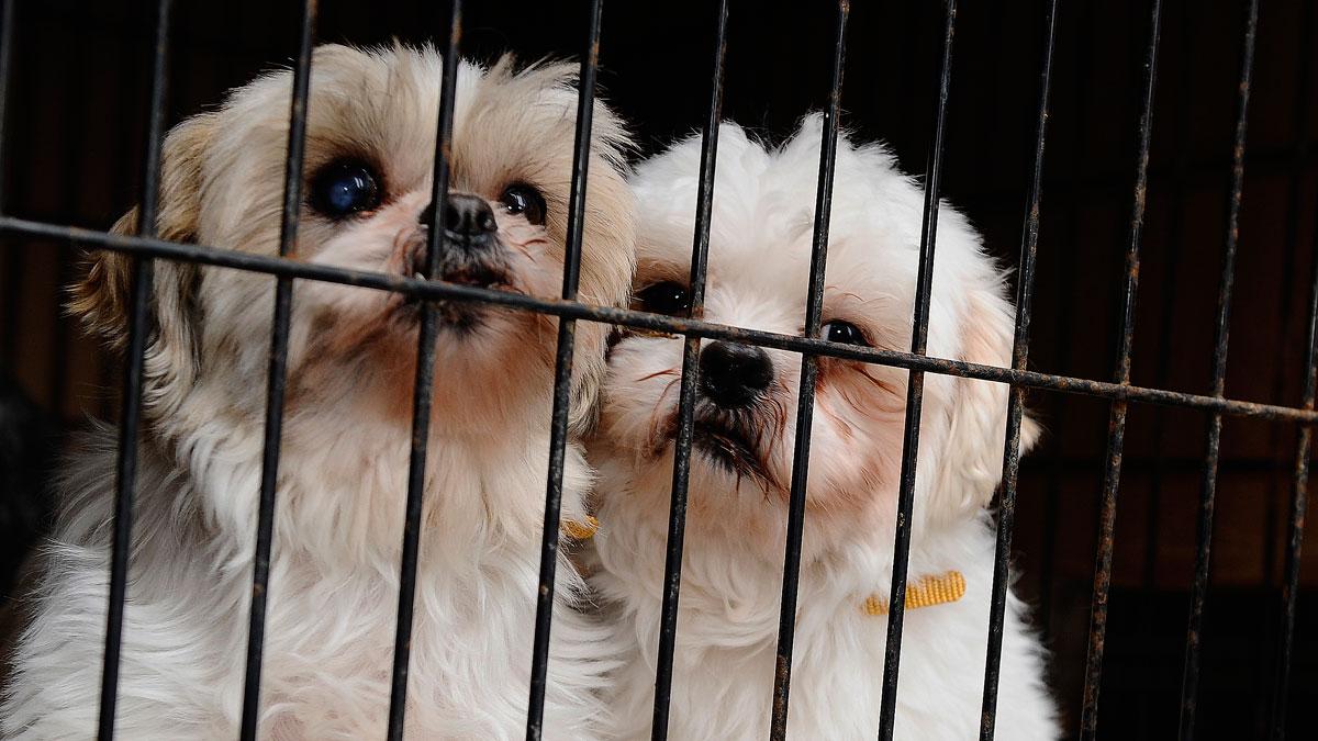 Dog Adoption_253635