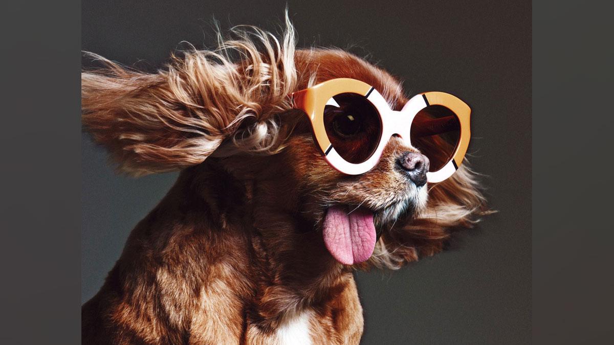 toast-the-dog_253629