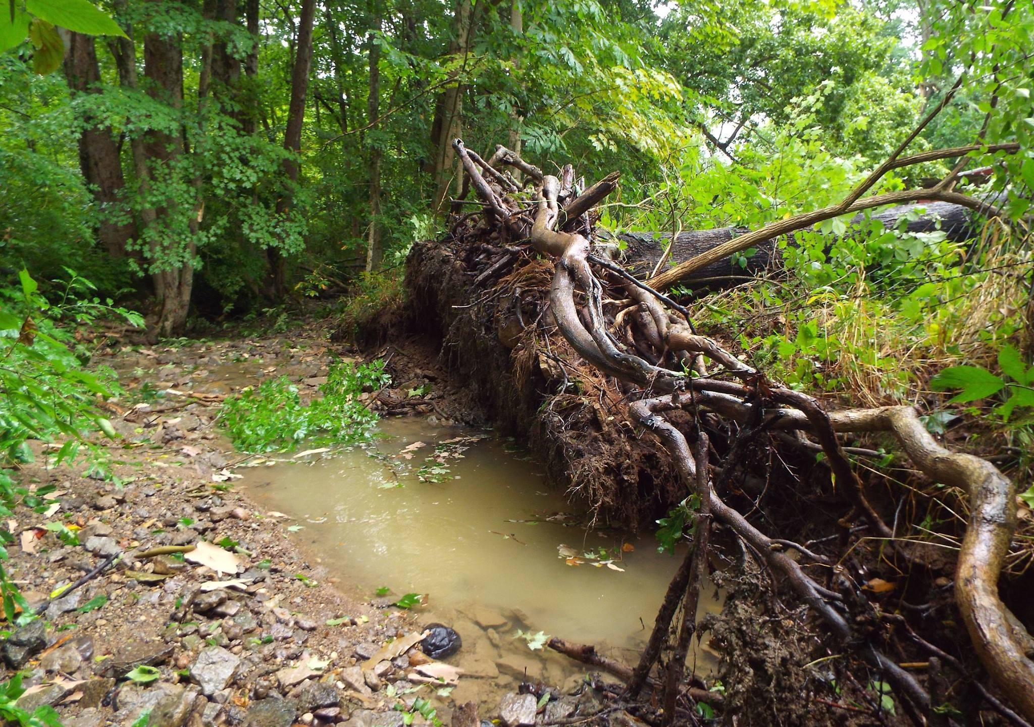 Trees down in Germantown - Carla Hale_255999