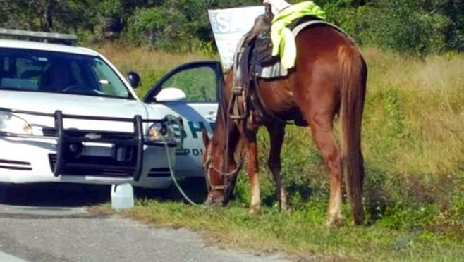 DUI Horse_278210