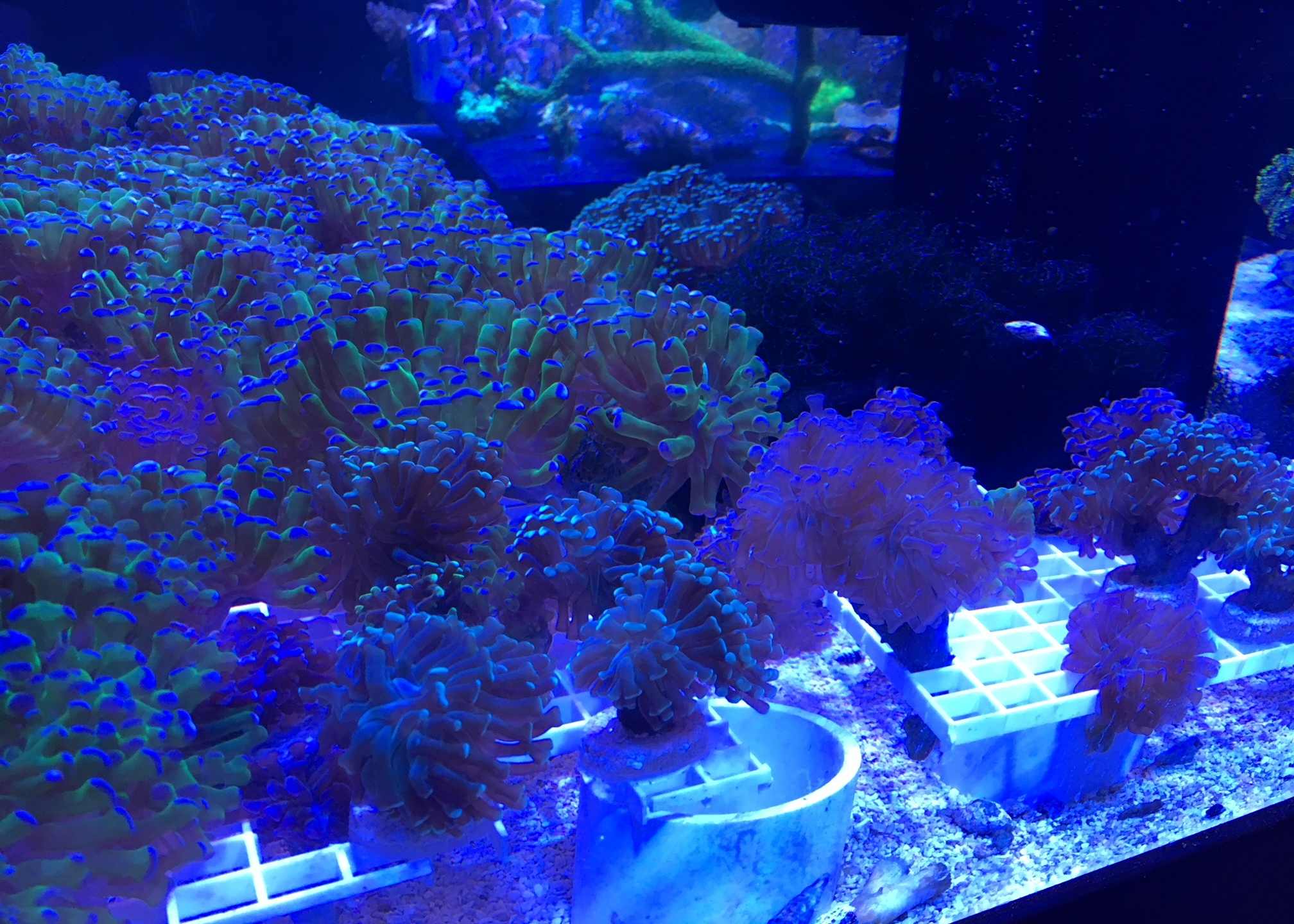 coralmainpic_283653