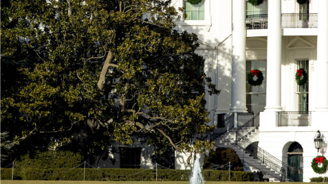 Part Of White House Magnolia Tree To Be Removed For Safety