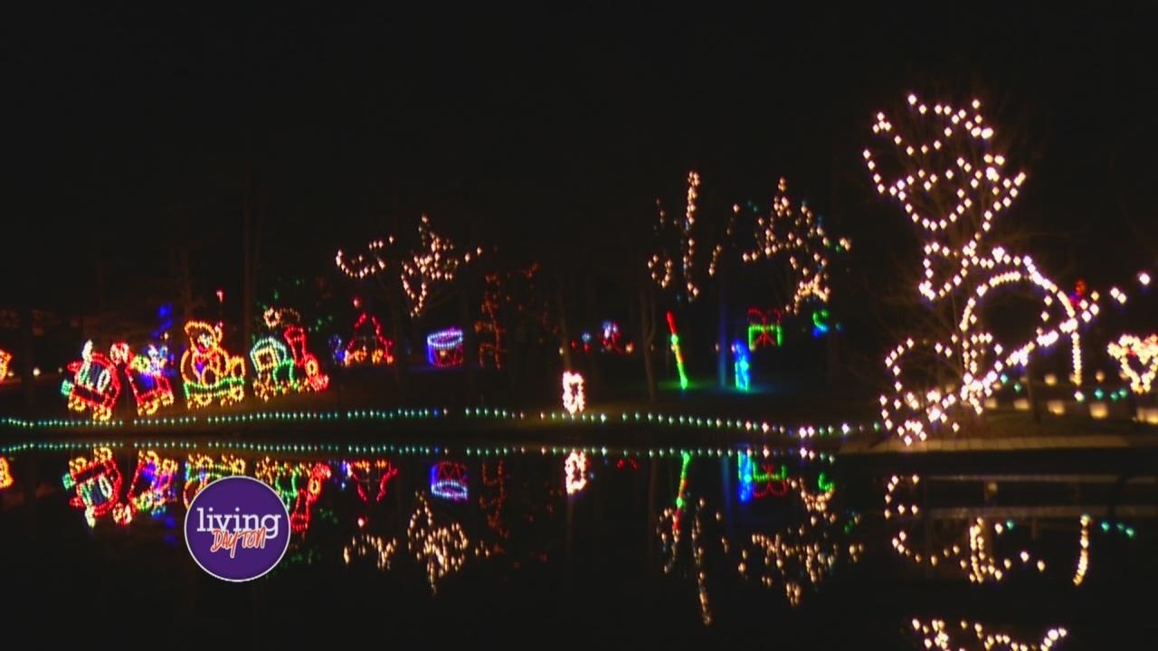 Woodland Lights_283825