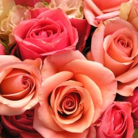 roses-flowers-valentines-day_1517879321399_340223_ver1-0_33247436_ver1-0_640_360_294280