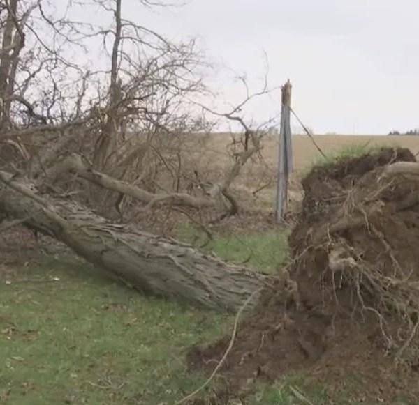 4-4-18 uprooted tree_1522877010481.jpg.jpg