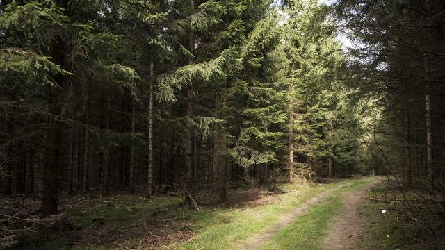 woods_1524519030100_40491649_ver1.0_640_360_1524522935708.jpg