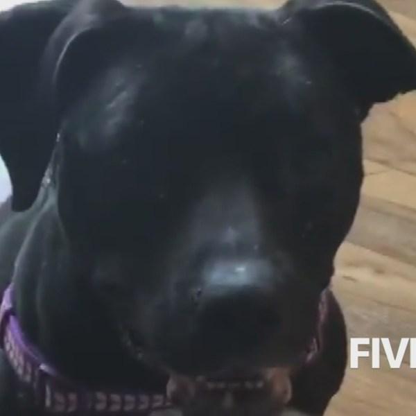 A_dog_s_euthanasia_stirs_online_uproar_f_0_20180613211443