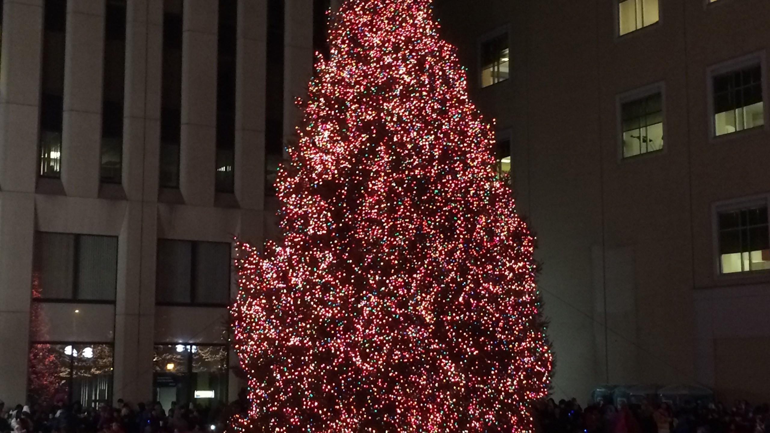 Dayton Christmas Tree_207815