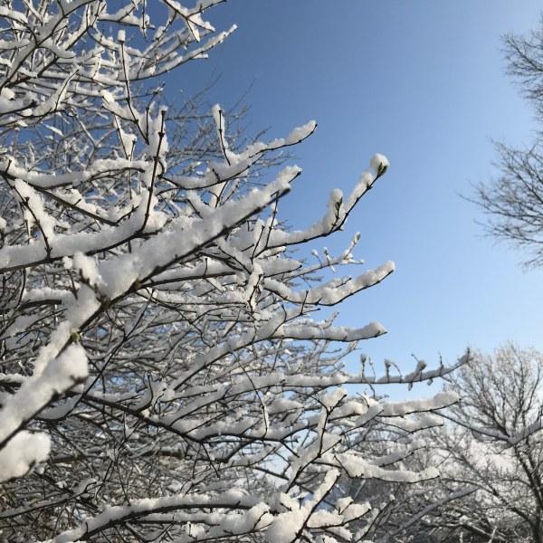 Snow Miami Township