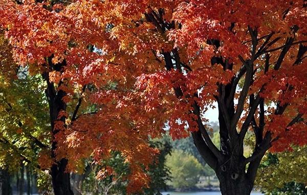 fall_leaves_1540820765098.jpg