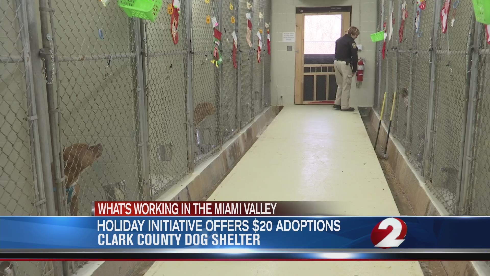 Holiday initiative offers $20 adoptions