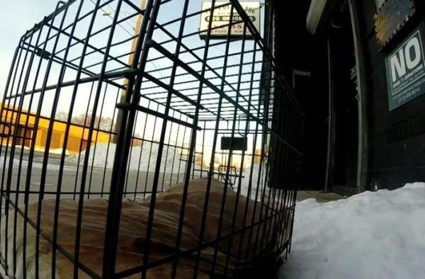 frozendog_288314