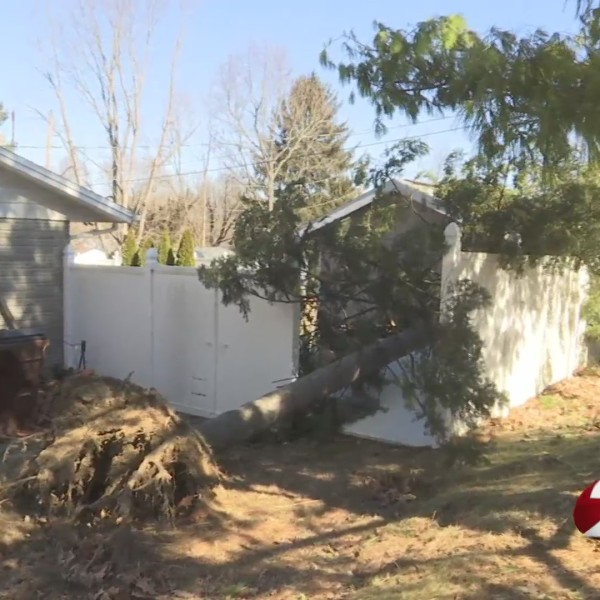 High winds damage trees in Xenia