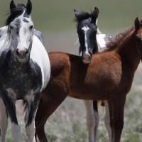 Wild horse_1552933390732.jpg-846652698.jpg