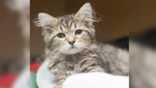 kitten_1551470396327.jpg