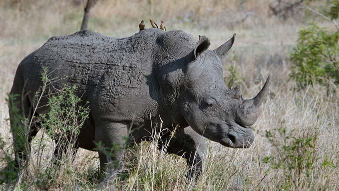 4-8 FILE Rhino_1554734577137.jpg.jpg