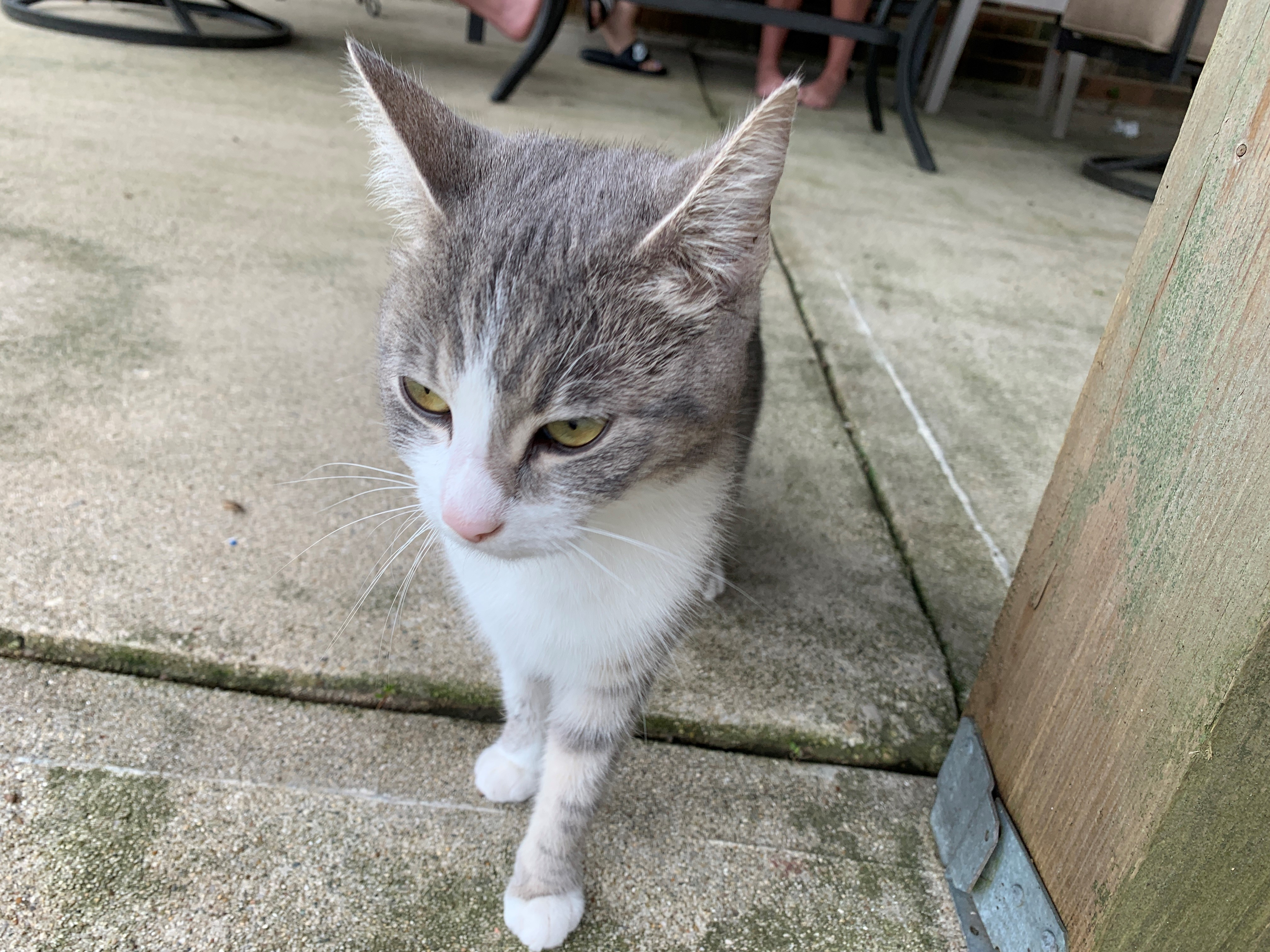 Mouse was found outside in a storm abandoned. She is much happier having a place to live and loves being with her people. (WDTN Photo)