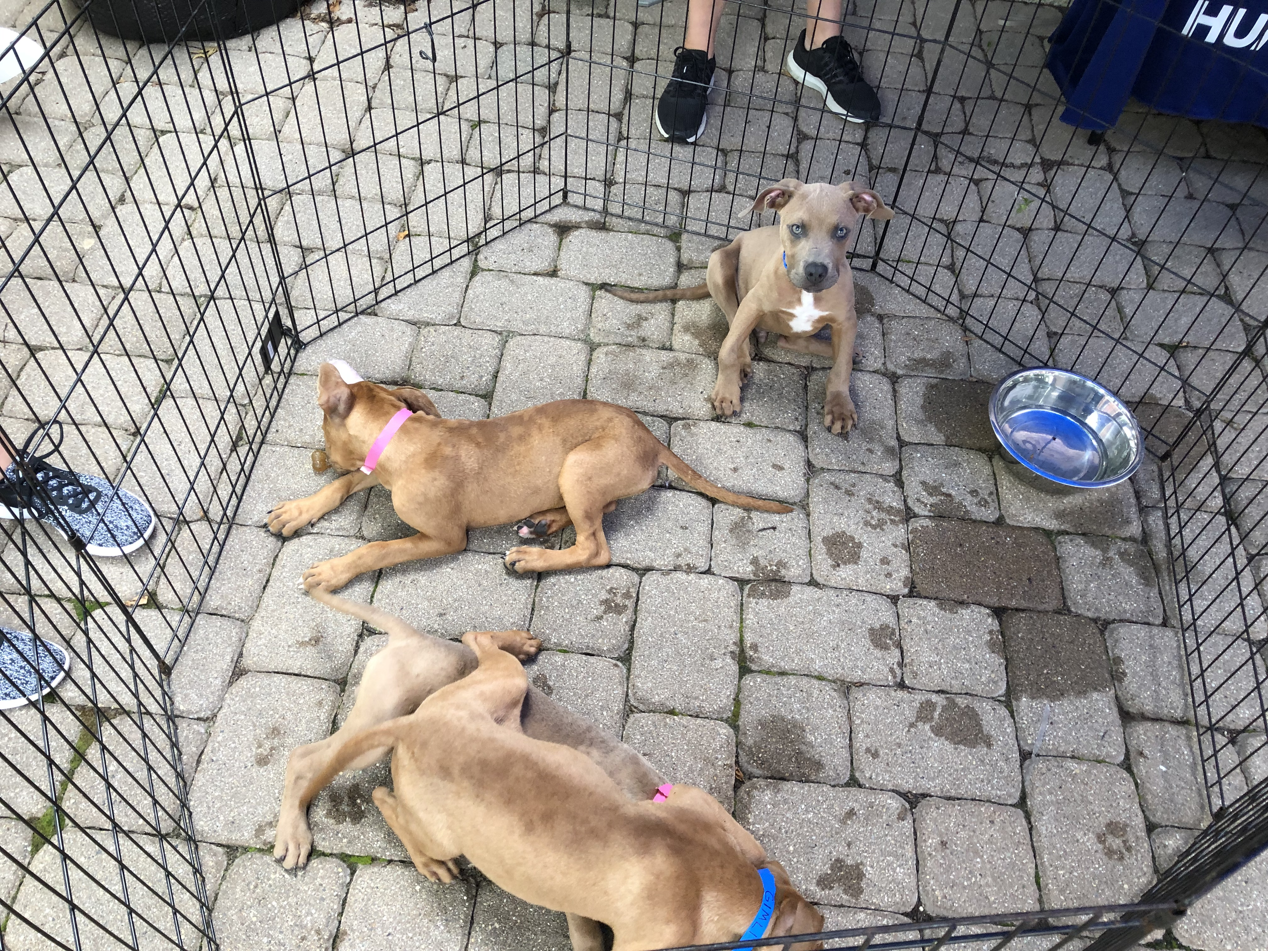 8-17 Humane Society CTS