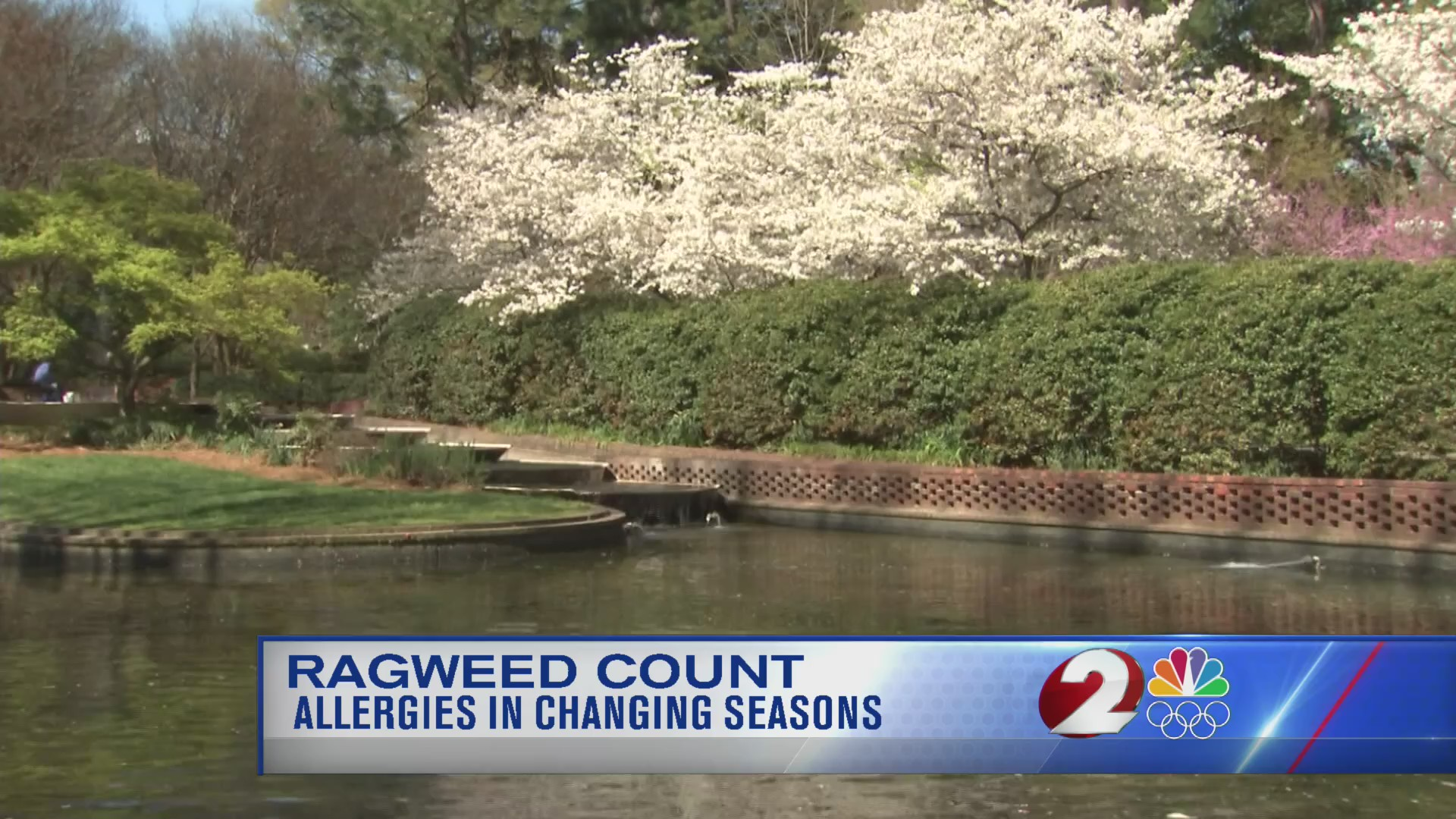 Ragweed count and allergies