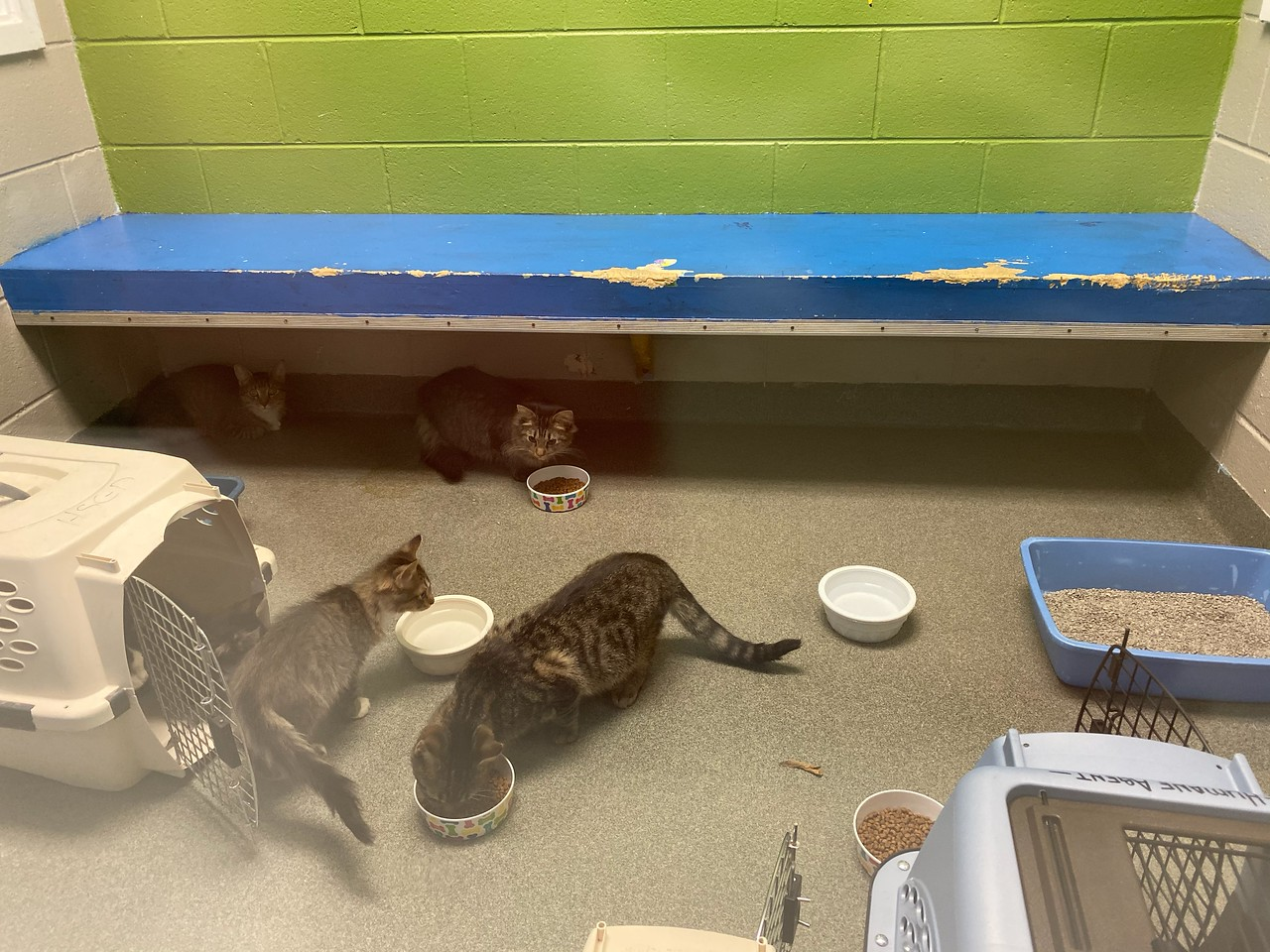 Abandoned Cats