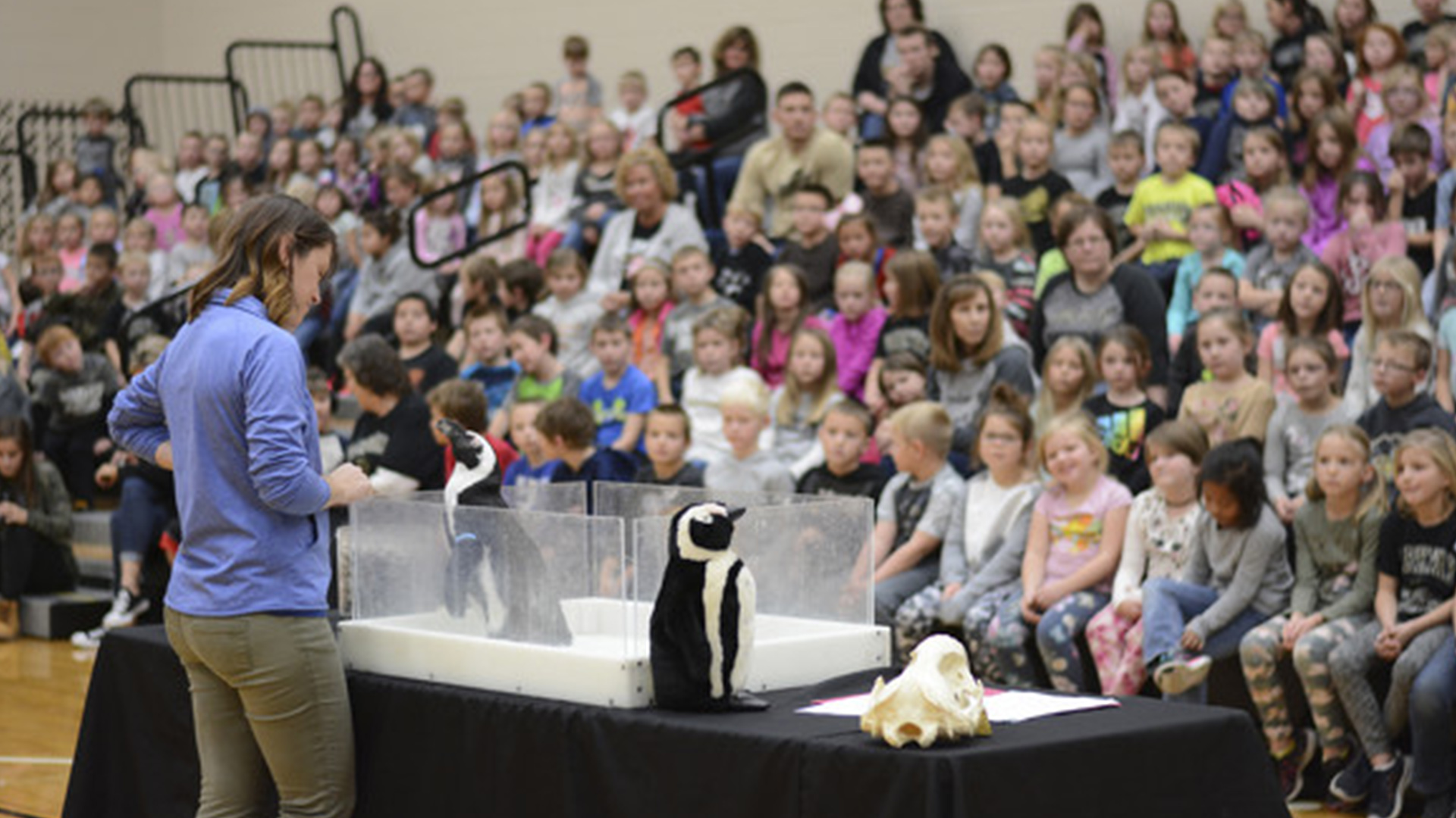 Celina Penguin Visit
