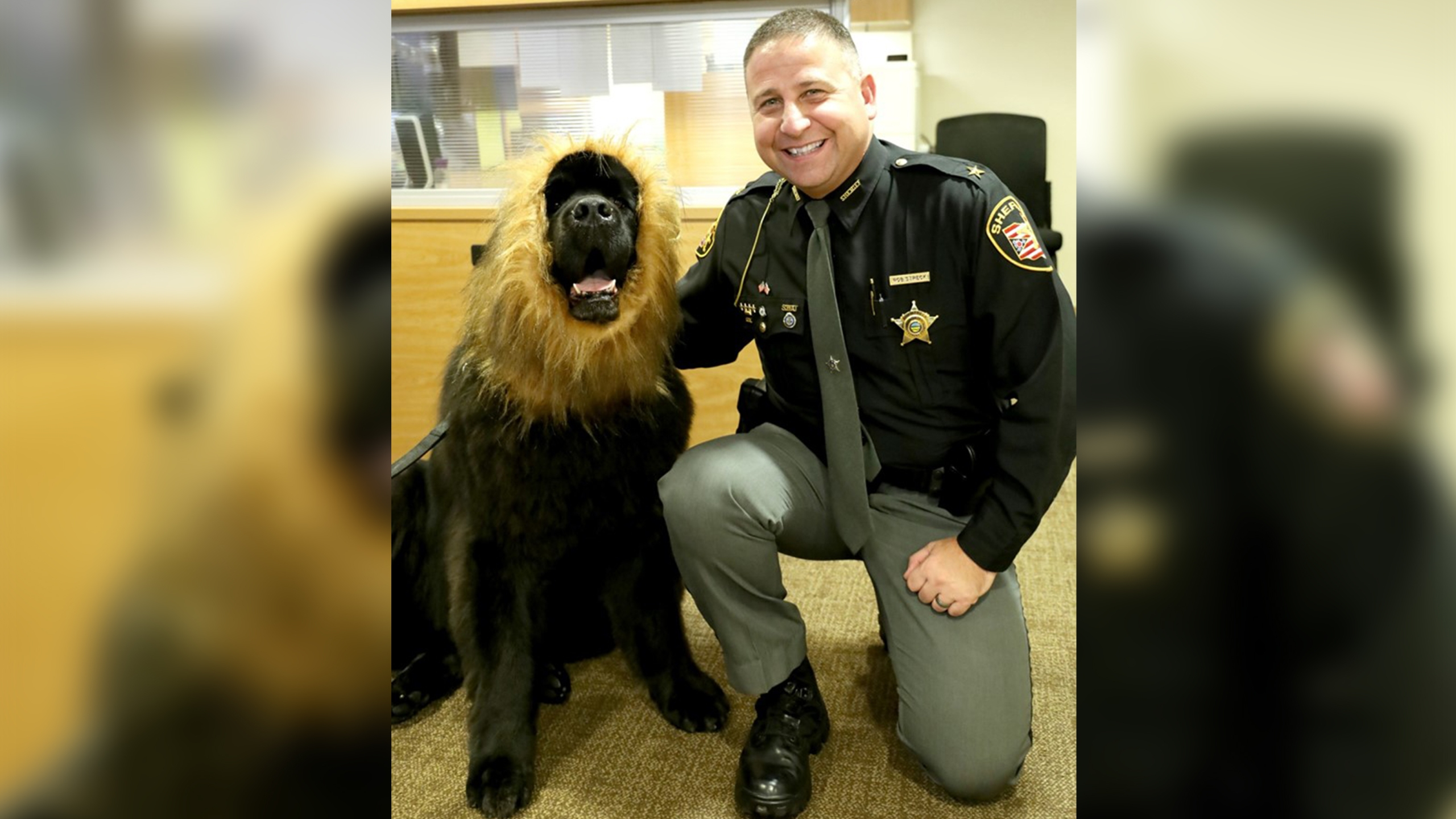 MCSO therapy dog