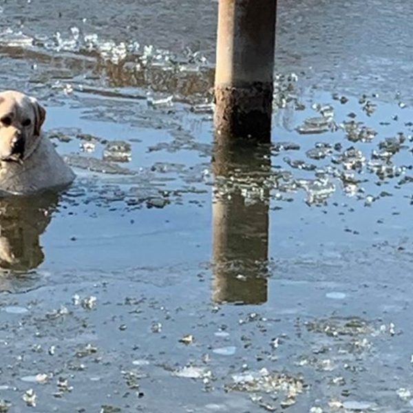 Miami Twp. crews rescue dog from icy pond at Ellis Park