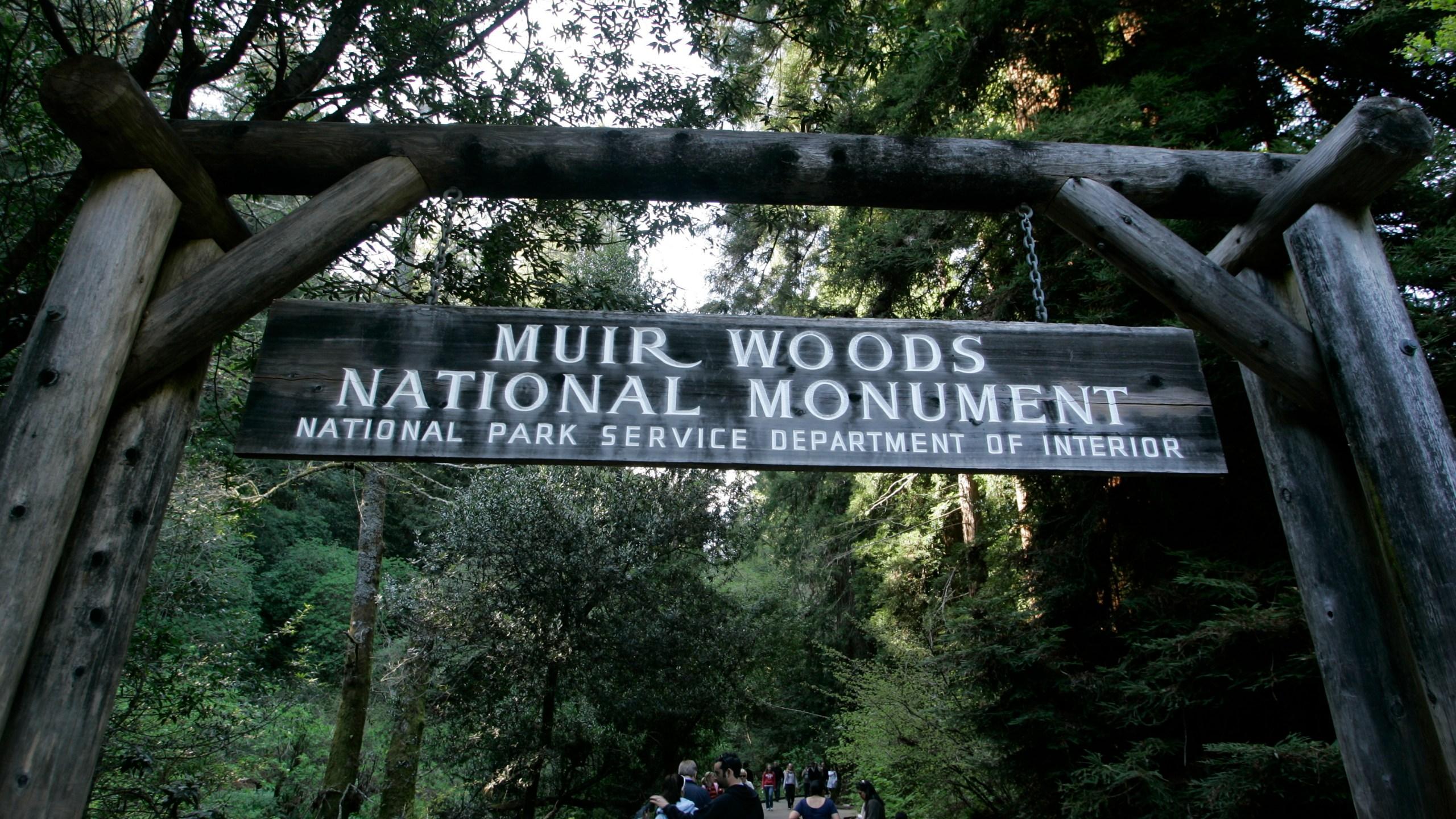 Hiker Killed-Falling Tree