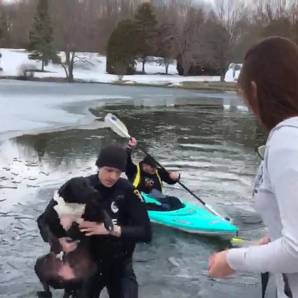 Dog Rescued from Icy Pond