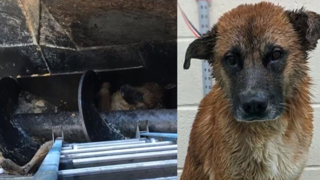 Memphis dog rescued from meat processing pit