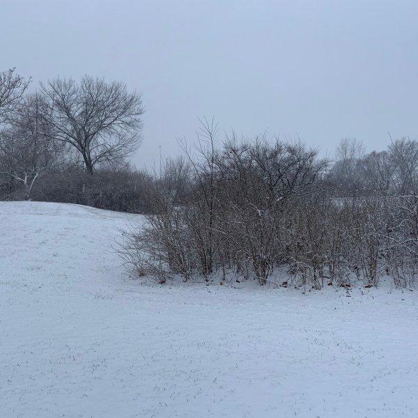 Piqua snow