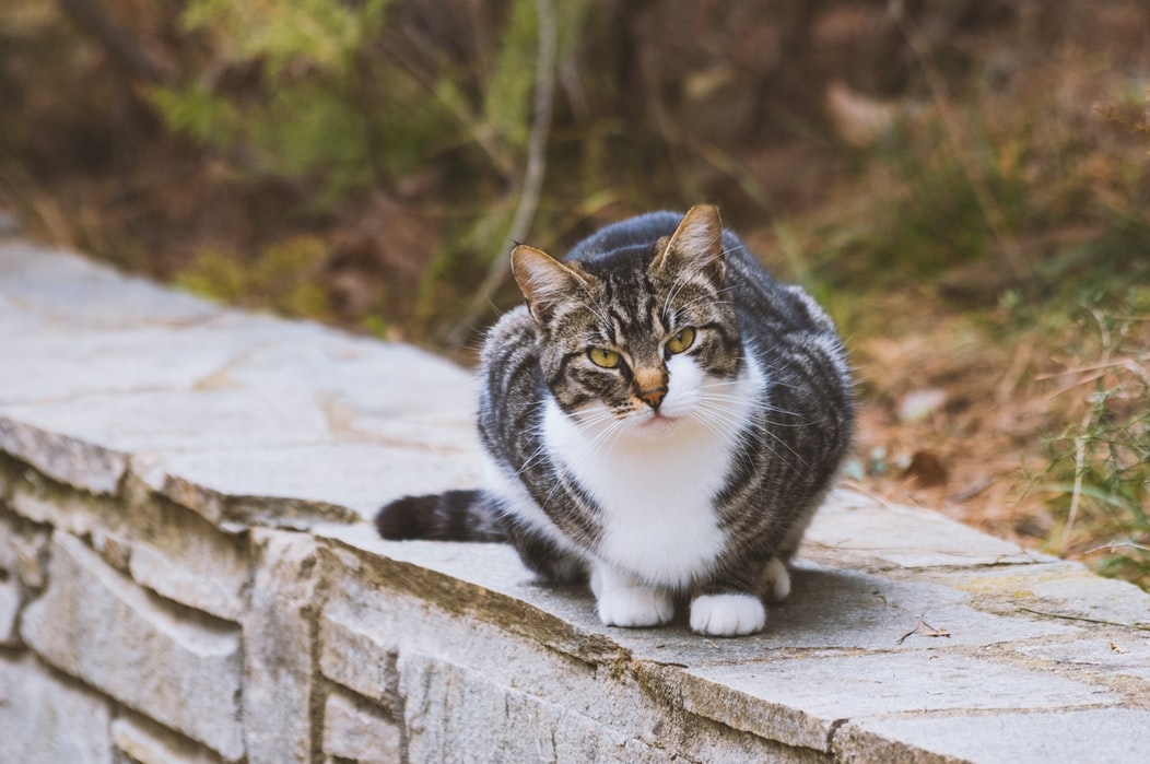generic cat