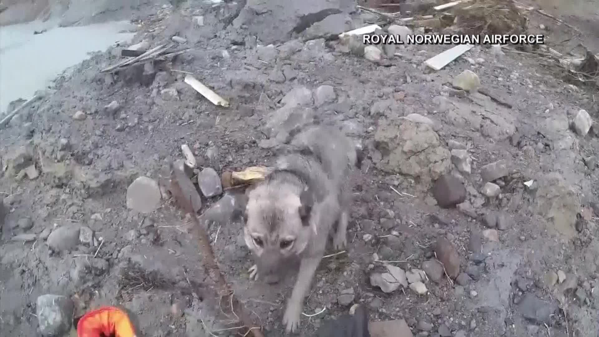 Dog rescued from landslide