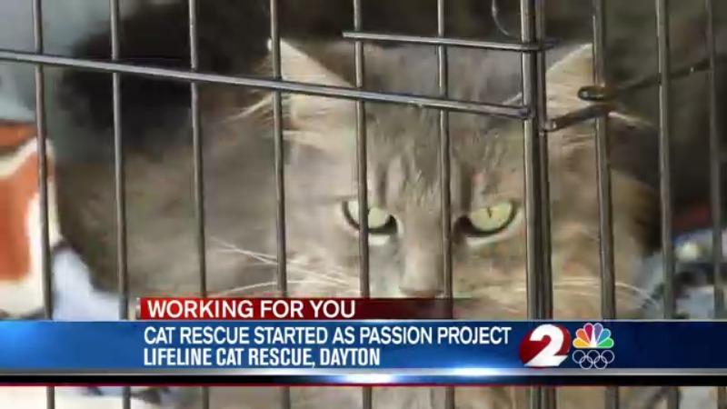 Lifeline cat rescue