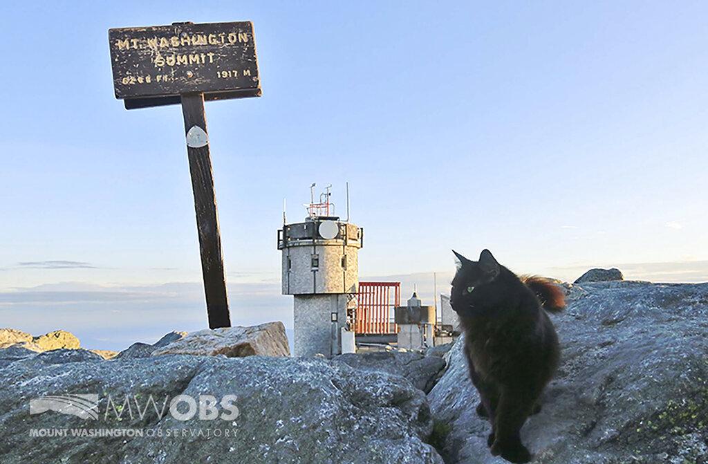 Obit Mount Washington Cat