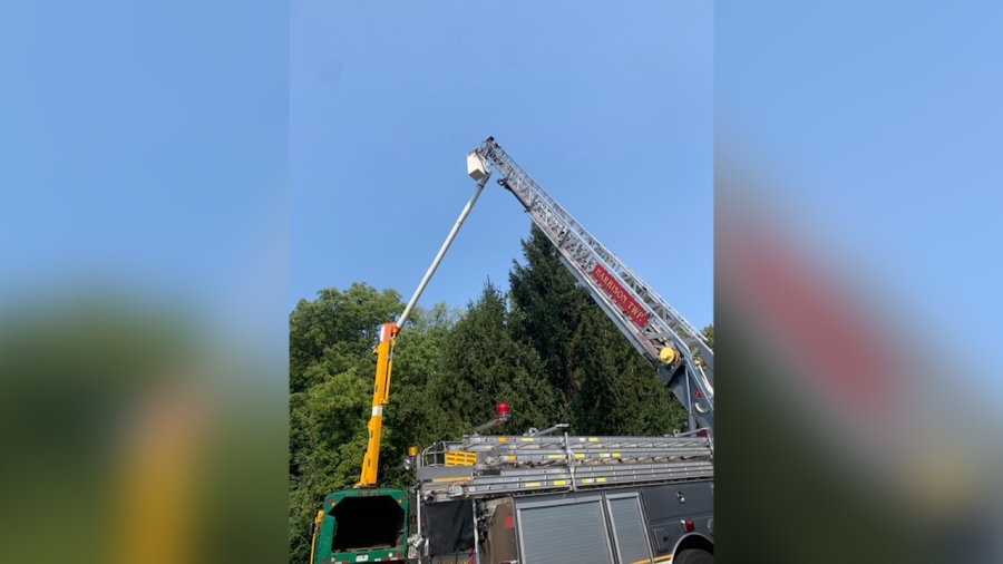 Tree rescue 2