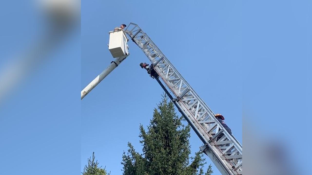 Tree-rescue
